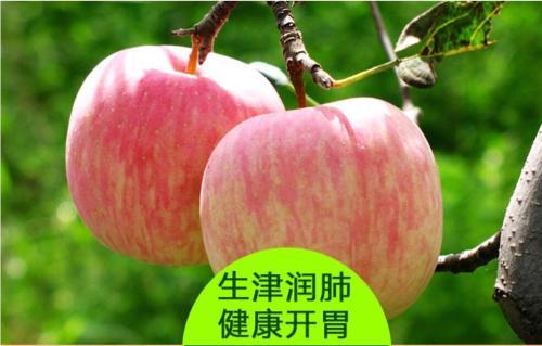 吃点苹果干,健康又营养